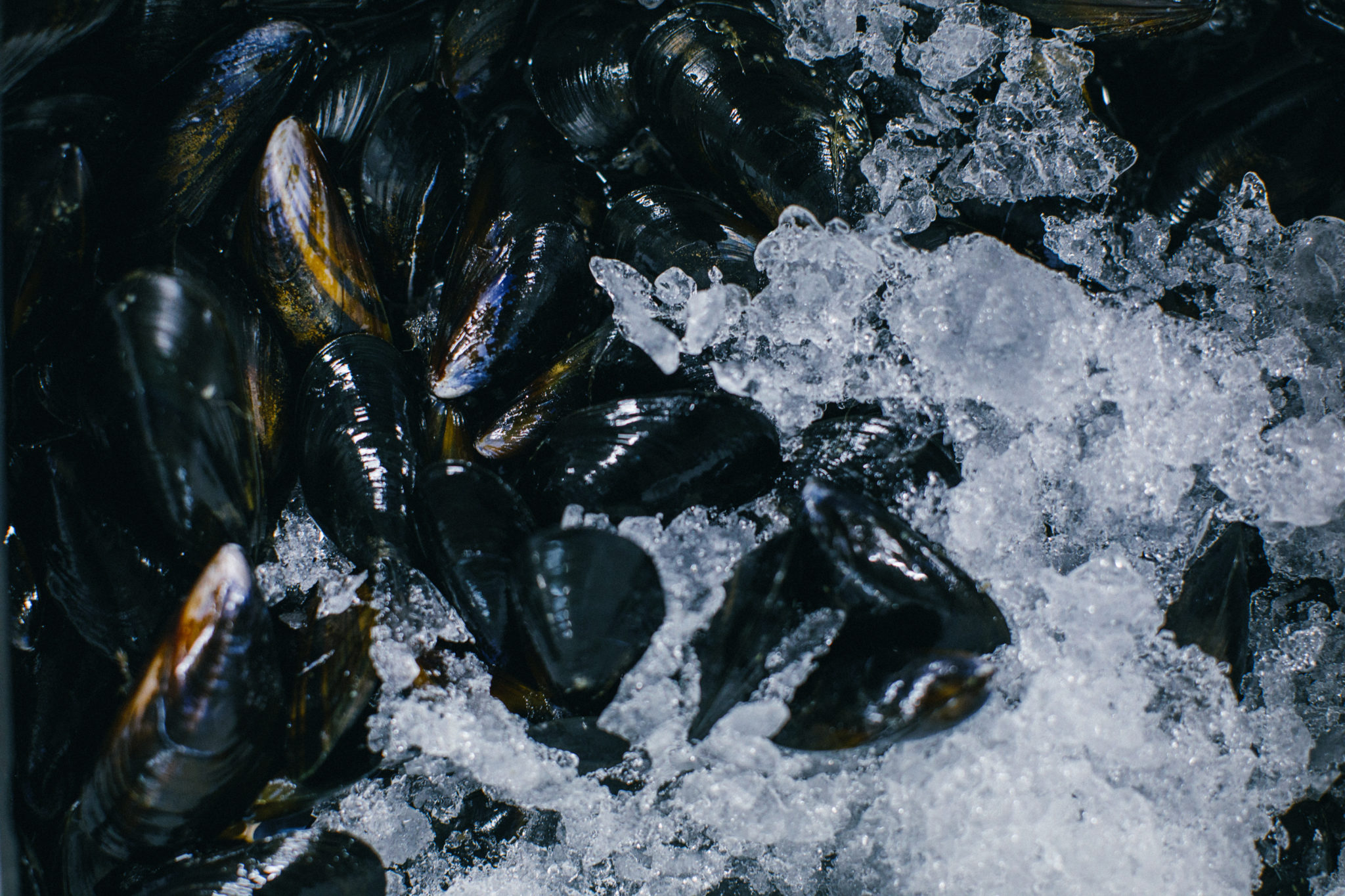 fresh seafood home delivery mussels