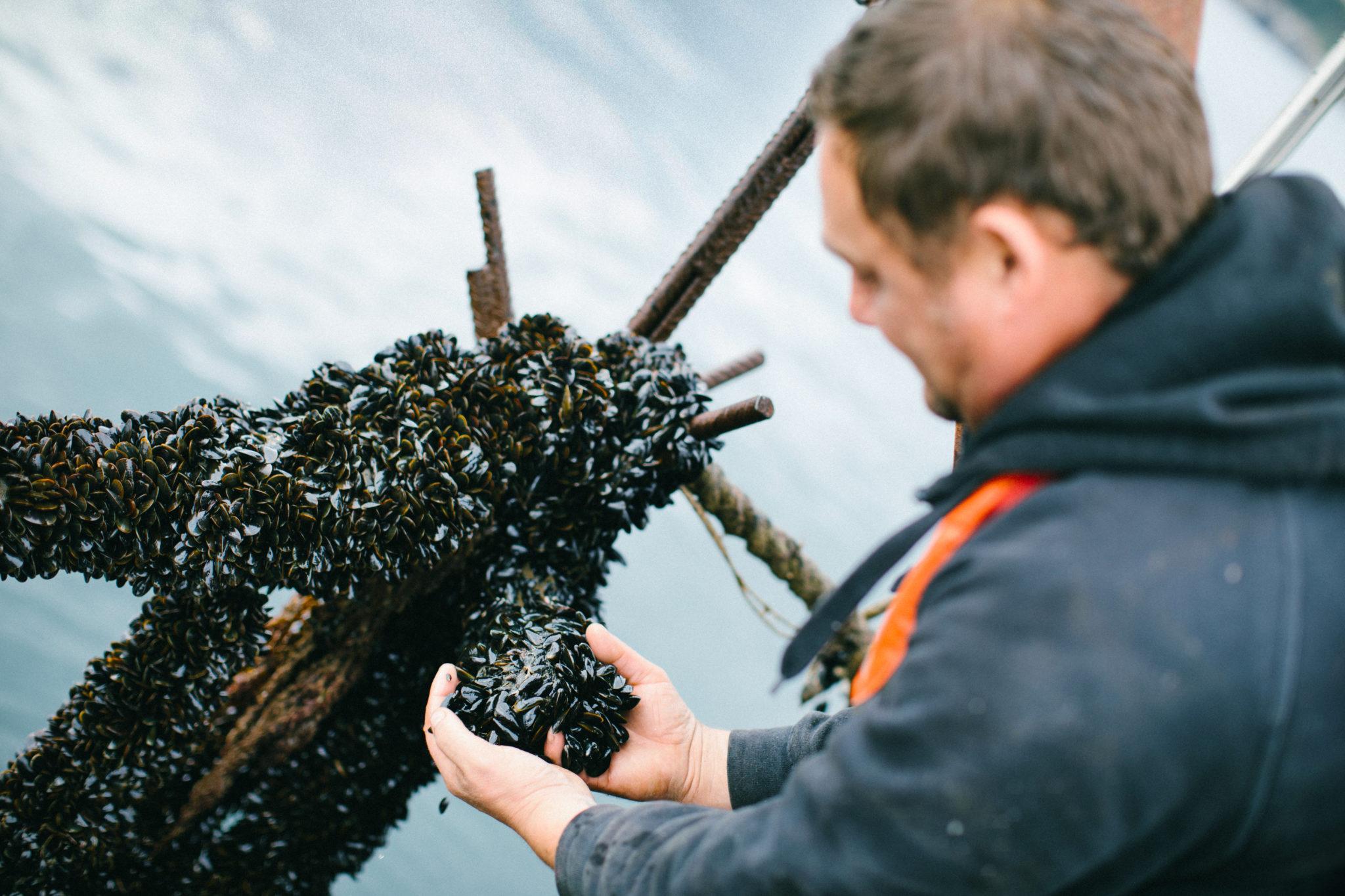 man holding organic mussels